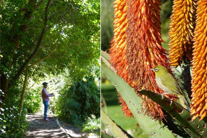 Kirstenbosch 1